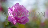 kadobon schoonheidssalon Bellefleur - Hardenberg